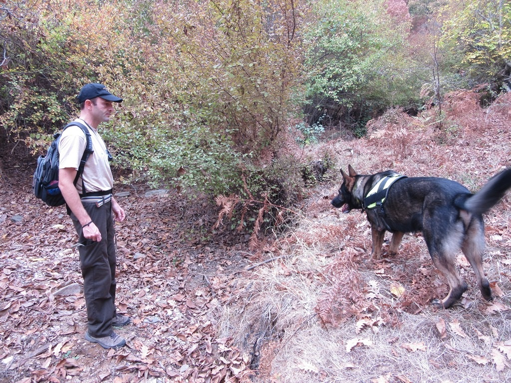 BSPB arrived immediately at the site, where together with Bars, specially trained dog to detect poisons, searched the area of the nearby village and surrounding area for poisoned animals.